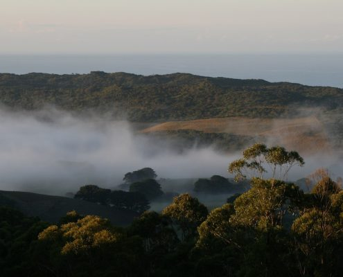 forest-ocean-and-valley-mist-at-glenaire