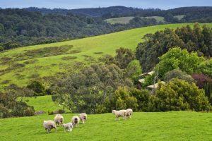 johanna-river-farm