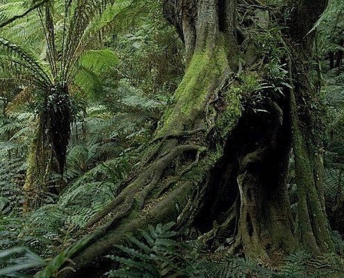 big-trees