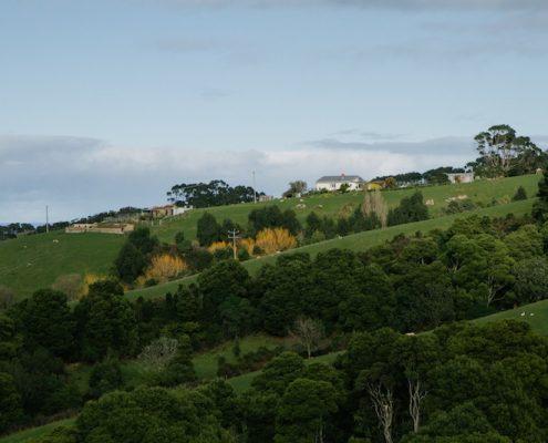 views-wombalano